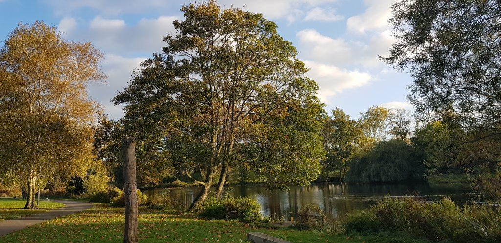 Trees at Pitville park Lake